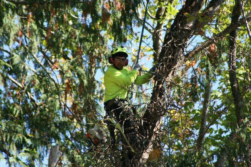 Tree arborists west auckland