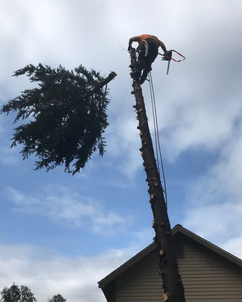 Tree services henderson