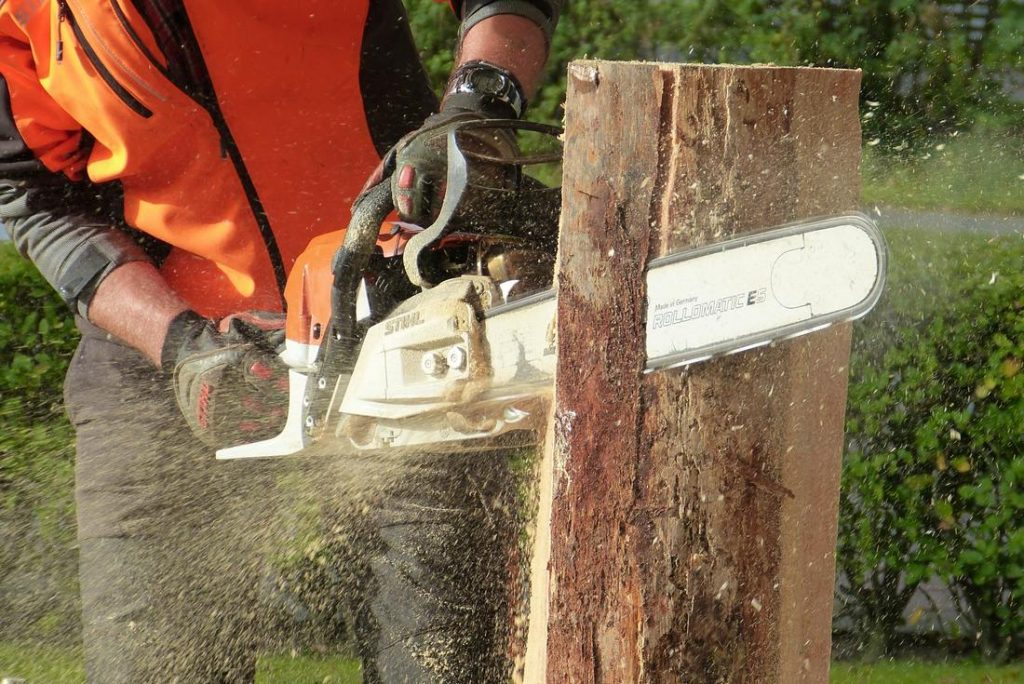 Tree services west auckland