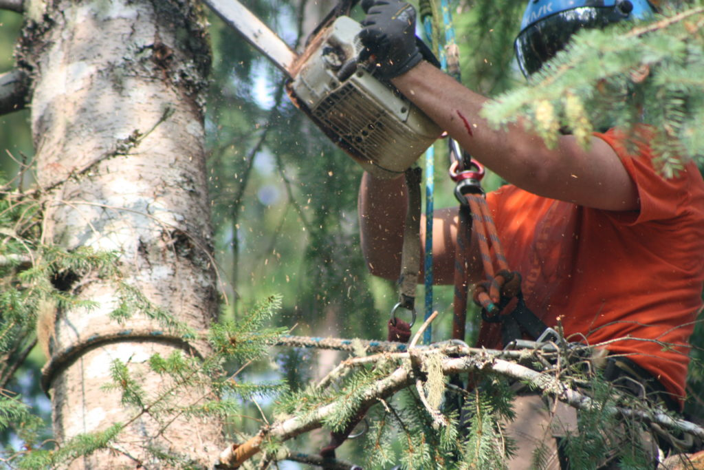 tree removal henderson