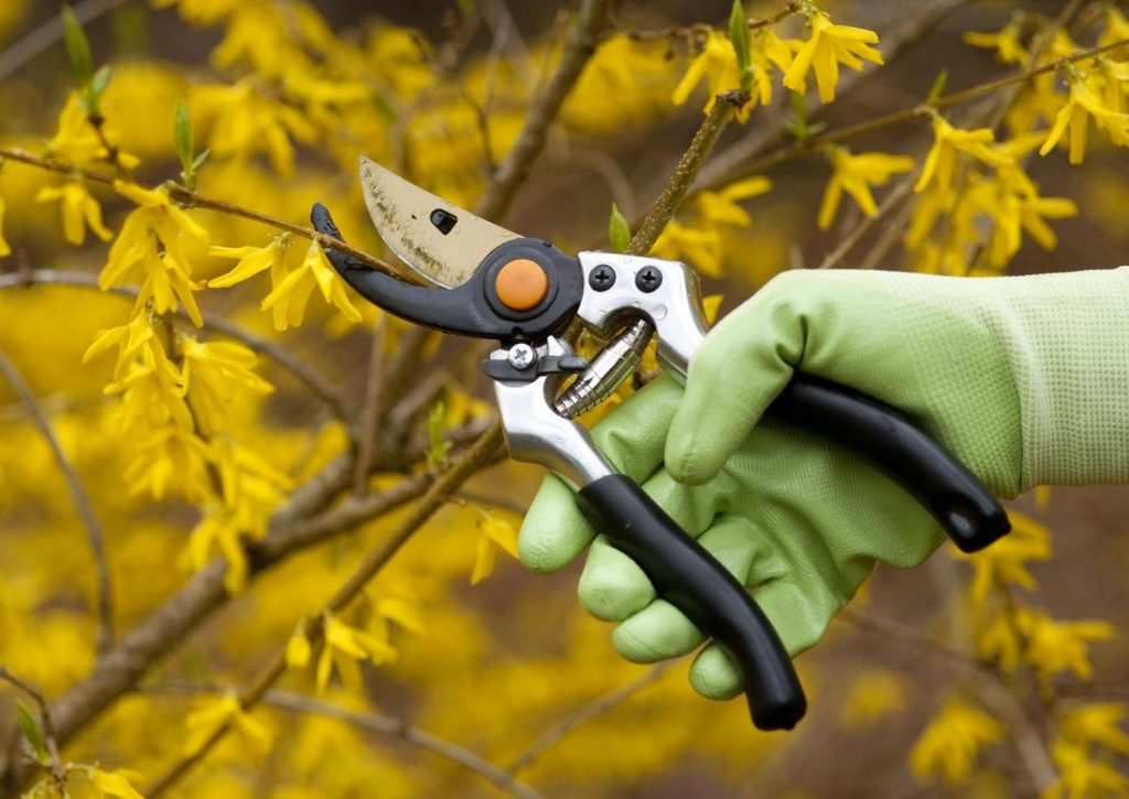 westgate tree services