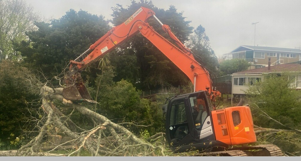 tree care hobsonville