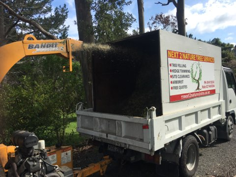 tree care west auckland