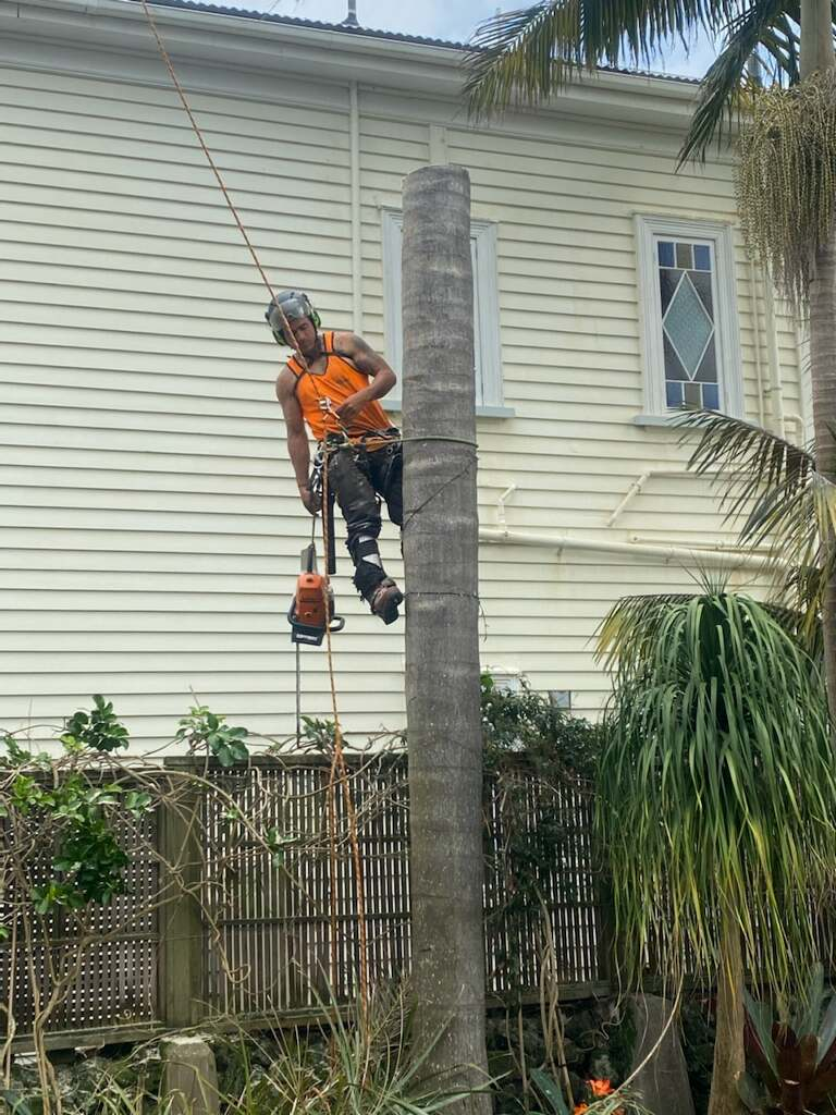tree removal cost west auckland